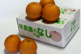 幸水梨(家庭用) 約2.5kg(6〜8玉)
