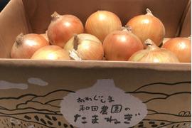 淡路島産玉ねぎ  10kg  サイズM〜LL