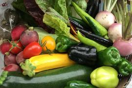 無農薬*旬の野菜セット*5品目以上=少人数用