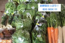 ●お得なBIG BOX● 中里自然農園/無農薬/お野菜詰め合わせBOX(約30〜35パック)