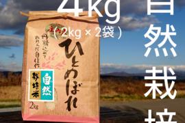 【 5ぶつき精米・4kg 】米の旨味たっぷり 自然栽培米 ひとめぼれ