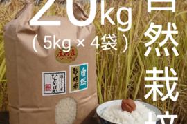 【 標準精米・20kg 】米の旨味たっぷり 自然栽培米 ひとめぼれ