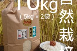 【5ぶつき精米 ・ 10kg 】米の旨味たっぷり 自然栽培米 ひとめぼれ