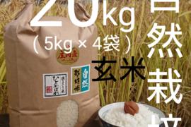 【 玄米・20kg 】米の旨味たっぷり 自然栽培米 ひとめぼれ