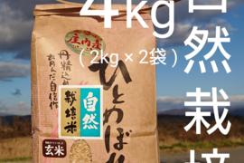 【 玄米・4kg 】米の旨味たっぷり 自然栽培米 ひとめぼれ