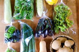 お待たせしました!販売再開*【無農薬】採れたての旬の野菜*大(7-10品目)