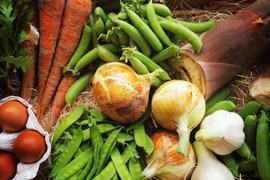 丹波篠山の旬の野菜と卵の詰め合わせセットM