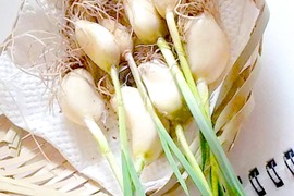 発芽ニンニク(約20個) & 季節のお野菜1品目のセット