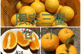 【食べチョク限定】甘夏1キロ&ニューサマーオレンジ2キロ&バレンシアオレンジ1キロセット