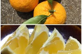 無農薬セット 甘夏1キロとニューサマーオレンジ1キロセット