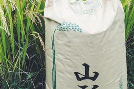 【H30収穫】【白米】つや姫 5kg 山形県飯豊町産 特別栽培米