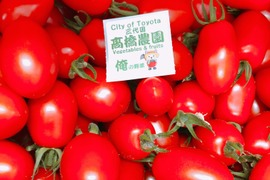 ハウス 土壌 ミツバチ栽培 ミニトマト(アイコ)レッド 単品 3キロ詰