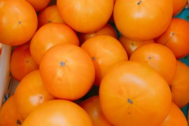 土壌 ハウス  無農薬栽培トマト(品種)桃太郎ゴールド2キロ箱