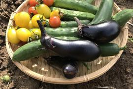 そぼくな旬の野菜4〜5品セット