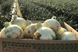 【淡路島産】特別栽培  新玉ねぎ 5kg
