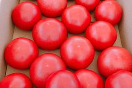 完全無農薬 木熟ハウス トマト  土壌栽培