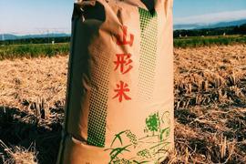 《コシヒカリ》【玄米5kg】【H30収穫】山形県飯豊町産