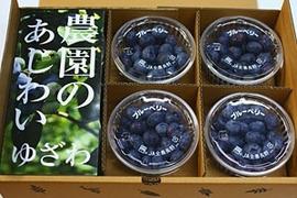 朝摘みフレッシュブルーベリー1.2kg(12カップ)入り箱