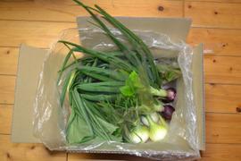野菜セット(初夏)