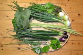 野菜ボックス(春の香りセット)