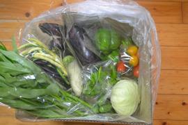おまかせ野菜セット(中) 80サイズ箱 6~8種類