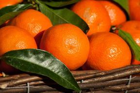 売上第3位!☆畑直送☆大特価!こだわり有機栽培野菜8品セット+畑で採れた果物をプレゼント‼️