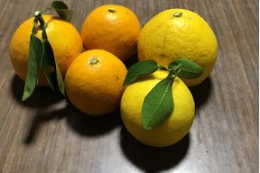 無農薬4/30よりお届け【紅白セット】紅ニューサマー&ニューサマーオレンジセット 各2キロずつ