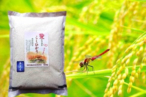 こしひかり 無洗米 6kg(2kg×3袋)備蓄米にも最適 農薬・化学肥料不使用 愛知県産100%