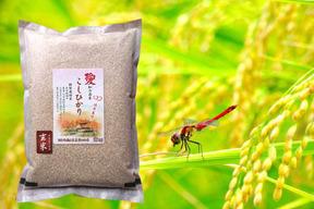 備蓄米 玄米食に贈る 新米こしひかり玄米4kg(2kg×2袋)農薬・化学肥料不使用 愛知県産100%