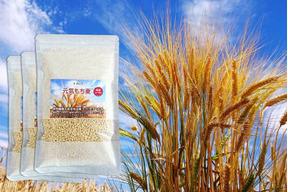 もち麦 希少品種 キラリモチ  250g×3 農薬・化学肥料不使用 愛知県産 令和元年産
