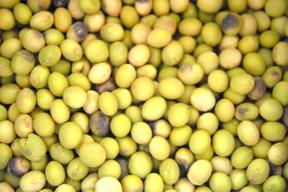 みやもと山の大豆3kg