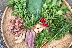 【高知県・中里自然農園】無農薬/お野菜詰め合わせBOX(Mサイズ・8〜10種類)