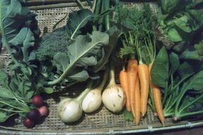 季節の野菜セット5~8種類セット