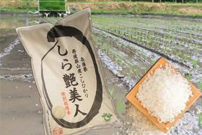 【新米令和1年産】 お米ソムリエがつくる丹波篠山のこしひかり 10kg