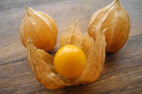 【霜にも負けなかった食べる宝石】オレンジチェリー  (食用ほおずき)<4パック>