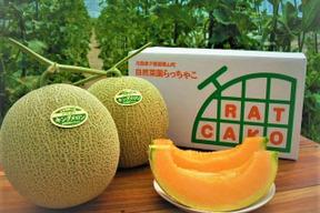 無農薬・無化学肥料のキングメロン 2玉(2.8kg~)