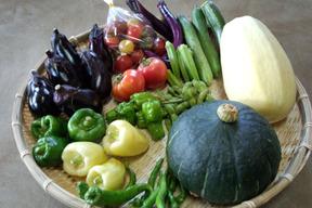 おまかせ旬の野菜セット(8~10種類)