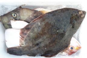 旬の鮮魚セット(4~6匹)☆60サイズ箱