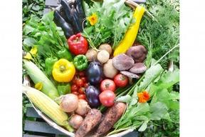 自然栽培 水輪の心まで癒すお野菜セット Lサイズ