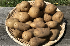 自然農法で育ったじゃがいも(メークイン) 3kg