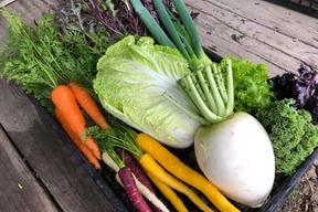 【旬の自慢野菜】自然栽培、べっぴんやさいセット(60サイズBOX)