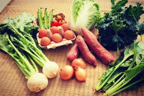 こどもの味覚を育むお試し野菜セット(野菜7種、卵6個)