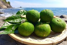【高知県産】自然栽培・晩夏の青柚子 20個