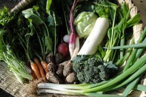 カトリケの季節の野菜セット(10品目前後)