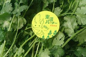 愛媛県産東温パクチー 1kg