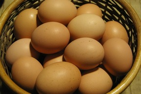 平飼い鶏の有精卵「ぽんあびらん」 60個セット