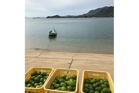 瀬戸内の無人島レモン(5kg/35~45個)