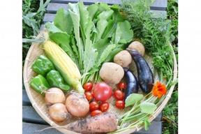 自然栽培 水輪の心まで癒すお野菜セット Sサイズ