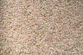 アイガモ米 玄米5㎏