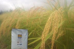 令和元年産 農薬不使用 佐渡コシヒカリ(在来種) 精米2kg
